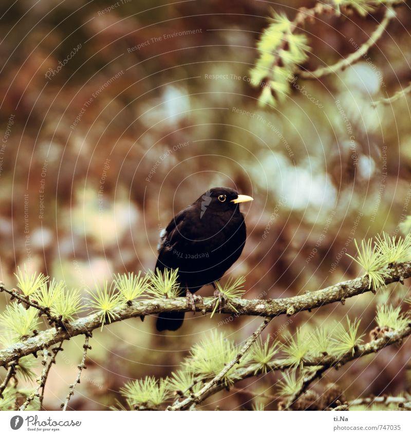 Blue Green Tree Animal Black Forest Yellow Spring Gray Brown Garden Bird Park Sit Wild animal Wait
