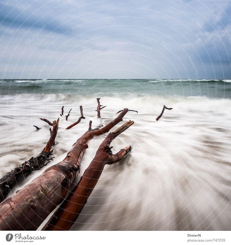 Blue White Water Tree Ocean Clouds Beach Coast Brown Horizon Waves Baltic Sea Darss Western Beach
