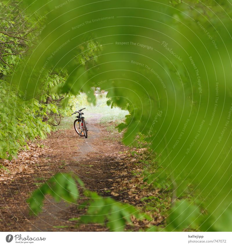 drive to the green Leisure and hobbies Vacation & Travel Tourism Trip Adventure Far-off places Freedom Summer Bicycle Environment Nature Landscape Plant Tree