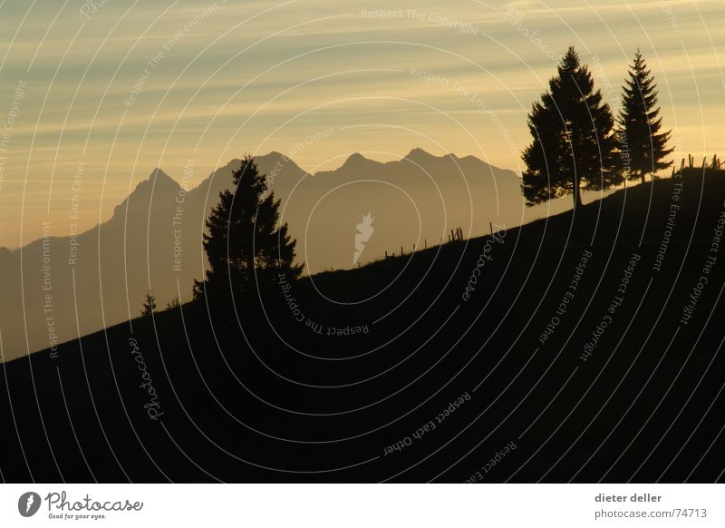 Mountain Sunset Evening Spruce Back-light Drop shadow Slope Mountain range Alpine Dusk Shadow Contrast ....