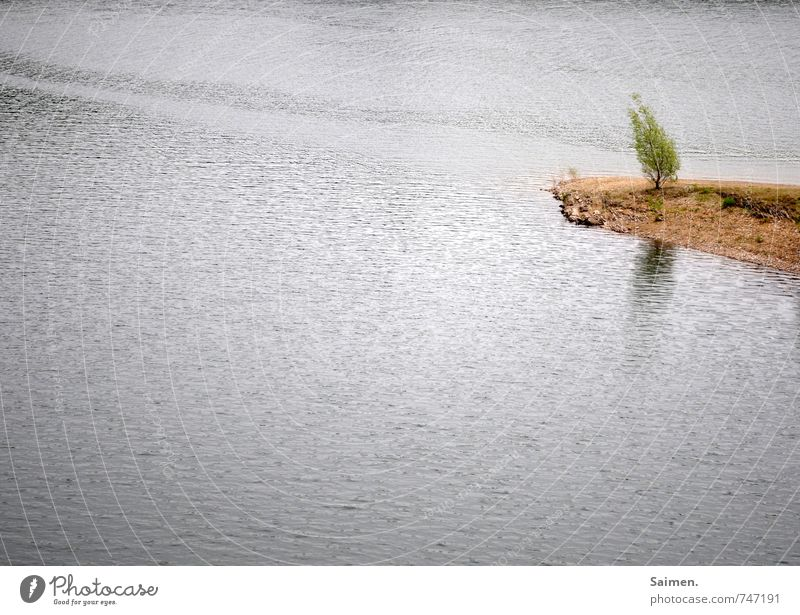 tilted Nature Landscape Water Growth Tree trunk Bushes Promontory Tilt Reflection Surface of water Colour photo Subdued colour Exterior shot Deserted