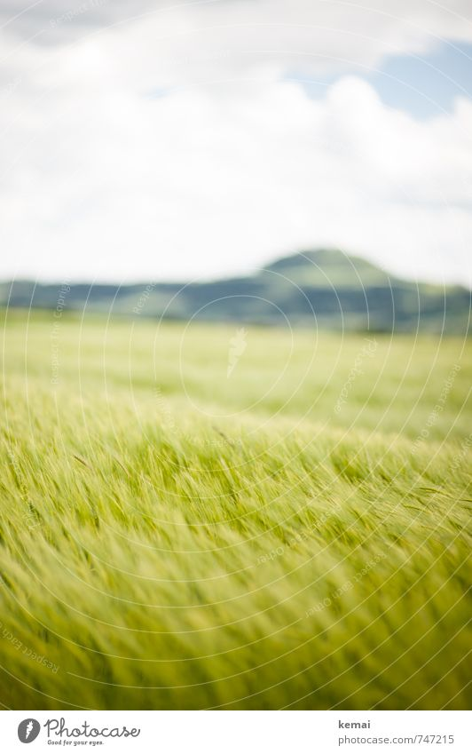 Sky Nature Plant Green Summer Landscape Clouds Environment Mountain Spring Field Growth Fresh Beautiful weather Hill Agricultural crop