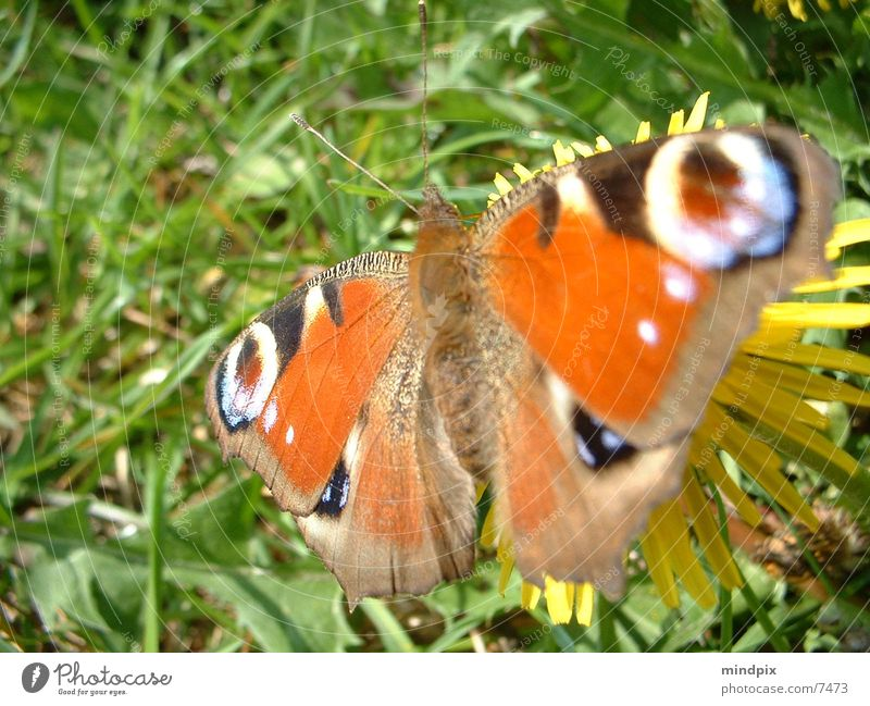 Nature Sun Colour Break Near Butterfly Easy