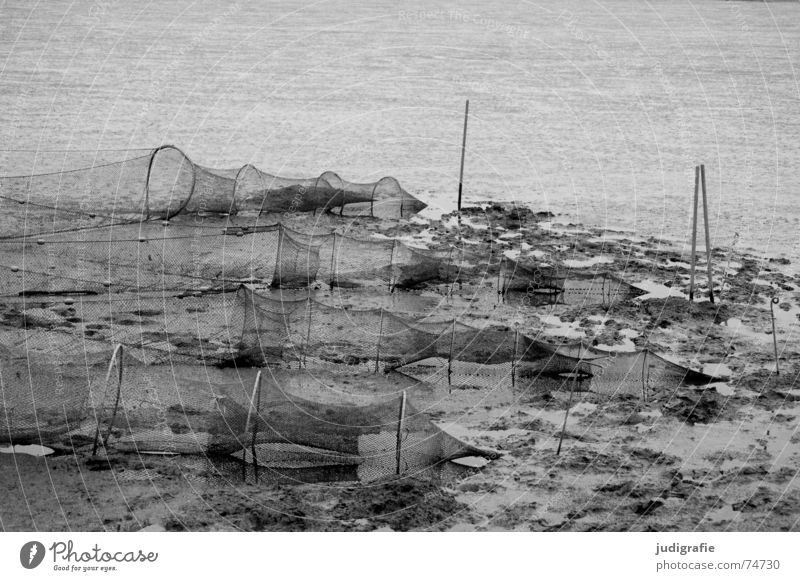 mudflat landscape Mud flats Fish trap Round Fishery Low tide Wet Ocean Salty Jadebusen Calm Black White Gray Gloomy North Sea Net Knot Danga Tracks