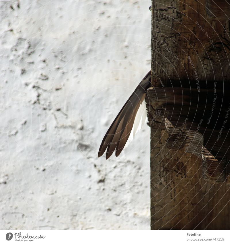 Don't hang your wings! Animal Bird Wing Bright Brown White Wall (building) Feather Wood Joist Colour photo Subdued colour Exterior shot Detail Deserted Day