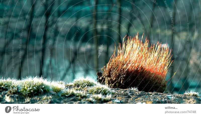 Moss - little sun hedgehog Nature Spring Warmth Forest Illuminate Thorny Hedgehog Close-up Back-light