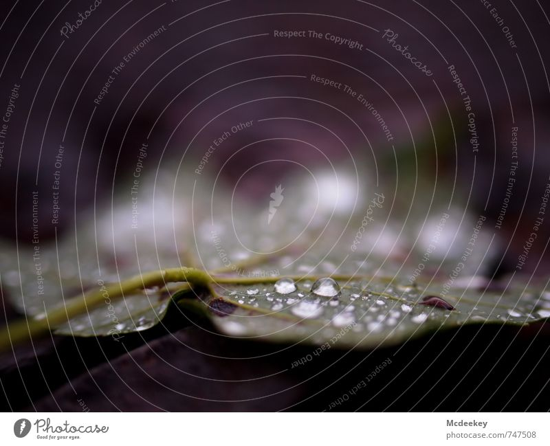 Morning dew (II) Environment Nature Plant Water Drops of water Summer Rain Tree Leaf Foliage plant Wild plant Forest Lie Authentic Fresh Cold Wet Natural Brown