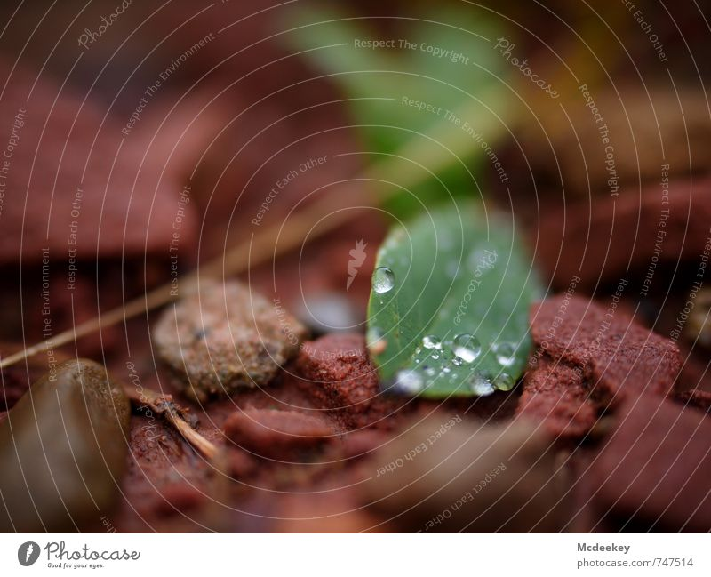 round (II) Environment Nature Plant Water Drops of water Summer Bad weather Rain Grass Bushes Leaf Foliage plant Wild plant Forest Lie Fresh Cold Wet Natural