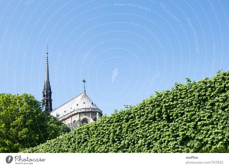 Lady, backside Cloudless sky Spring Beautiful weather Hedge Paris France Town Capital city Church Tourist Attraction Landmark Notre Dame Blue Green Elated