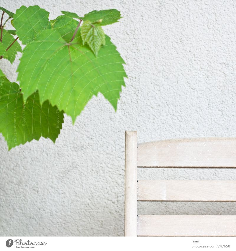 Green White Plant Relaxation Wall (building) Contentment Simple Vine Feces Foliage plant Agricultural crop