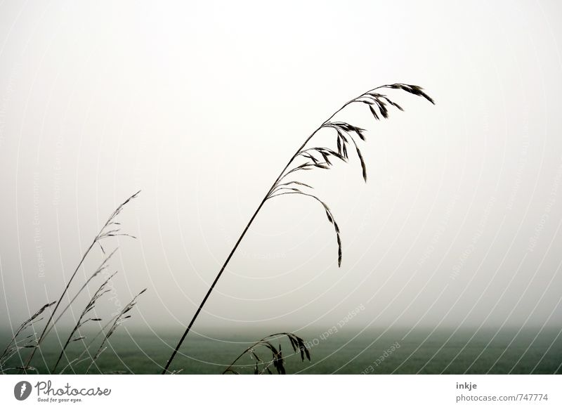 Sky Nature Green White Loneliness Landscape Calm Cold Environment Autumn Spring Grass Gray Horizon Air Weather