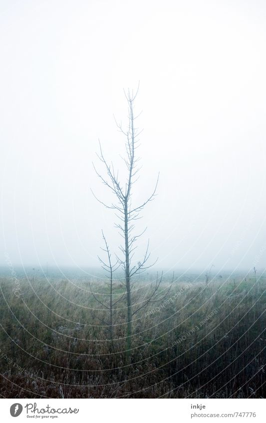Sky Nature Tree Loneliness Winter Dark Forest Environment Emotions Meadow Autumn Spring Moody Air Weather Fog