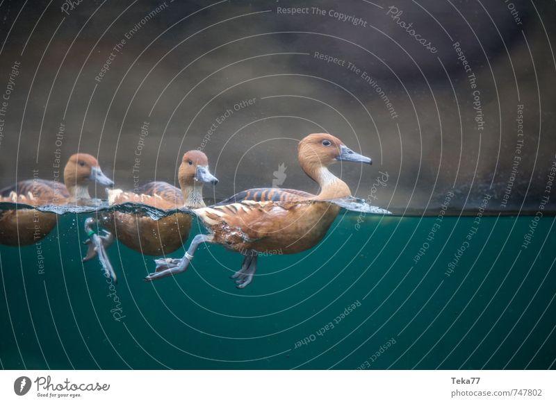 Animal Exceptional Wild animal Esthetic Group of animals Duck Aquarium