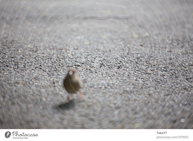 Animal Bird Wild animal Esthetic Creativity Escape