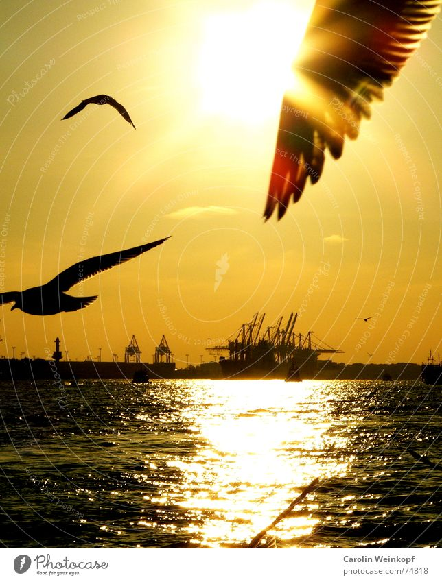 Water Sun Loneliness Far-off places Together Waves Wing Hamburg Harbour Wanderlust Seagull Dusk Jetty Crane Goodbye Elbe