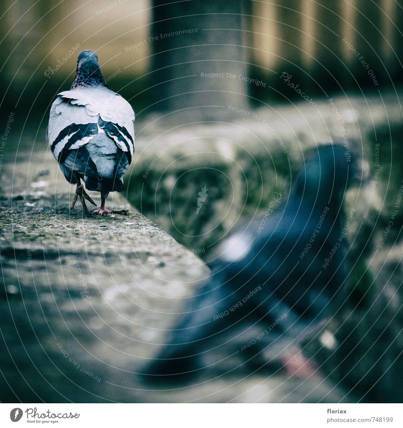 City Loneliness Animal Cold Wall (building) Emotions Love Wall (barrier) Gray Going Bird Together Wild animal Walking Pair of animals Communicate