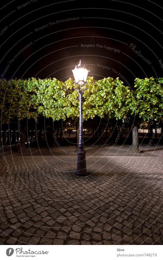 night watch Brühlsche Terrasse Dresden Evening Lantern Street lighting Paving stone Cobblestones Lighting Tree