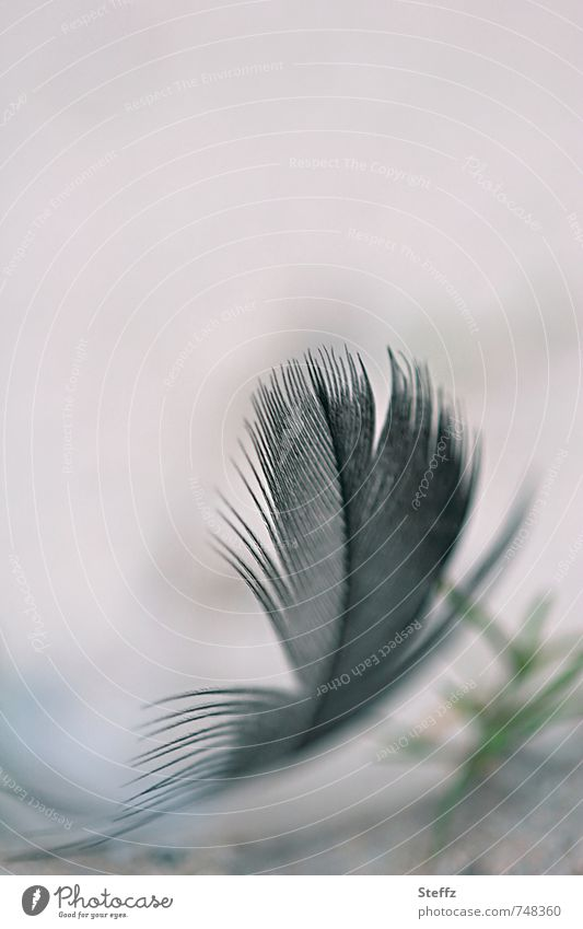 Nature Black Feather To fall Delicate Ease Easy Beige Fine Airy Disheveled Bright background
