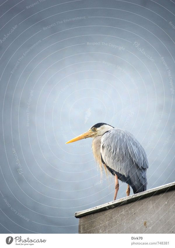 """200."" Nature Animal Istanbul Turkey Town House (Residential Structure) Wall (barrier) Wall (building) Roof Wild animal Bird Heron Grey heron 1 Observe Looking"