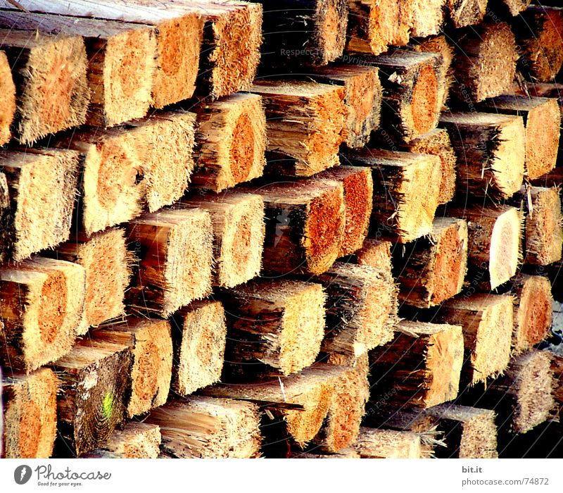 confidence man Winter Construction site Craft (trade) Environment Fire Autumn Warmth Tree Wood Sharp-edged Brown Open fire Firewood Material Fir tree Heat