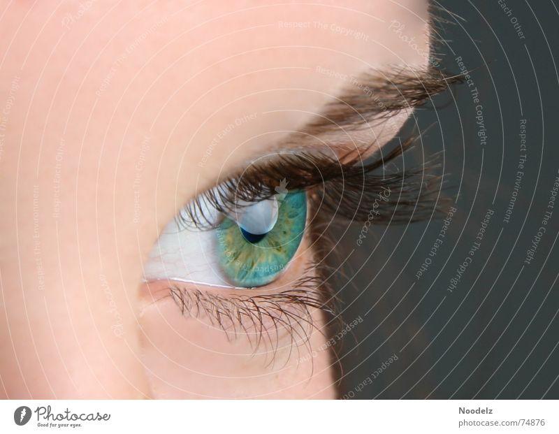 Human being Blue Green Face Eyes Skin Eyelash Eyebrow