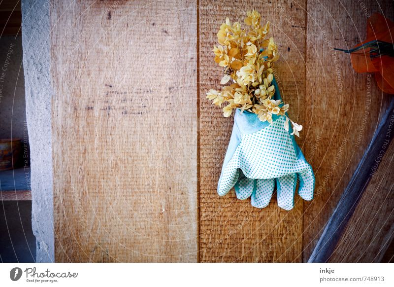 garden idyll Joy Leisure and hobbies Living or residing Garden Gardening Spring Summer Ostrich Dried flower Deserted Wooden wall Protective clothing Gloves