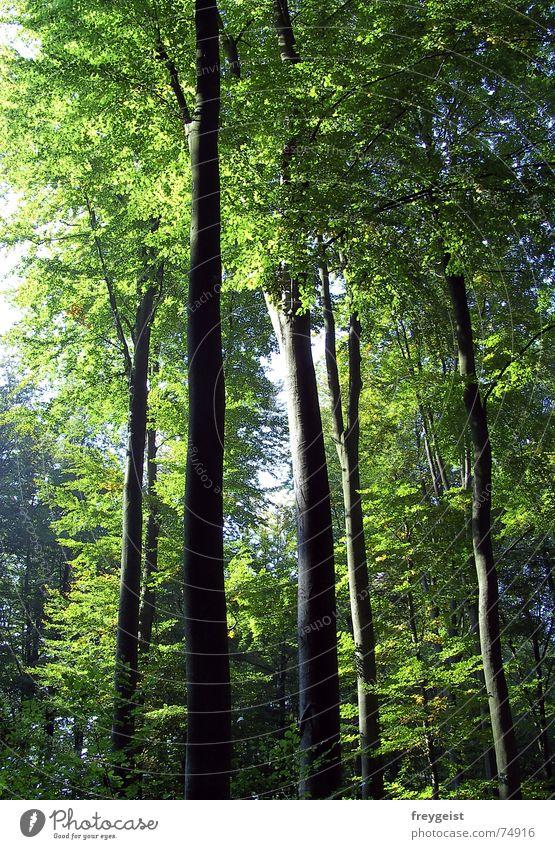Nature Tree Sun Green Forest Autumn Lighting To go for a walk Idyll Harmonious Wood flour