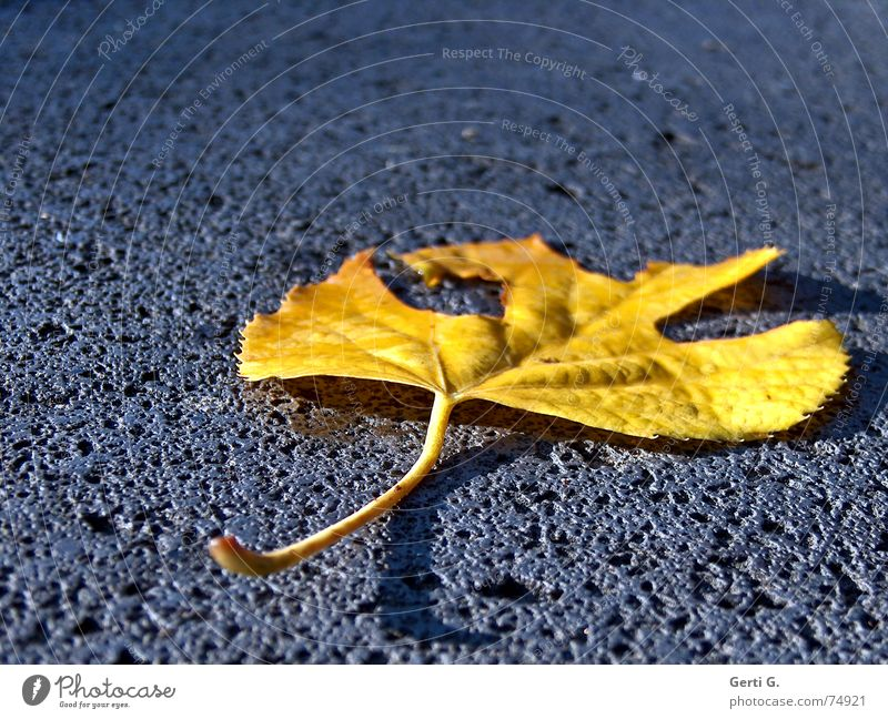 Blue Tree Leaf Loneliness Yellow Autumn Stone Lie Broken To go for a walk To fall Derelict Trash Sudden fall Hollow Seasons
