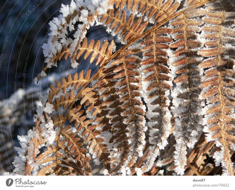 Ice crystals on plant Winter Frozen Cold ossified torpor Snow