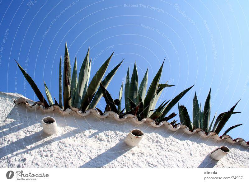 azuro Agave Cactus Wall (barrier) South Summer Sky Blue Mediterranean sea