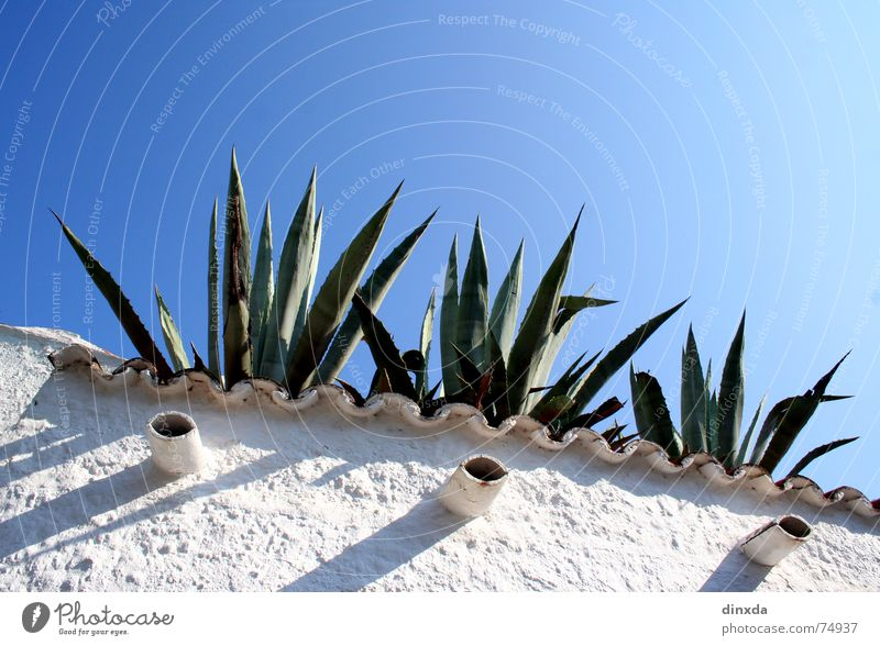 Sky Blue Summer Wall (barrier) Cactus South Mediterranean sea Agave