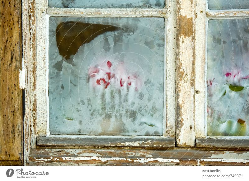 early bloomers Alexandrovka Park Potsdam Prussia Chateau Sanssouci Castle Snow wallroth Winter Cold Ice Tulip Frostwork Window Glass Window pane Pane