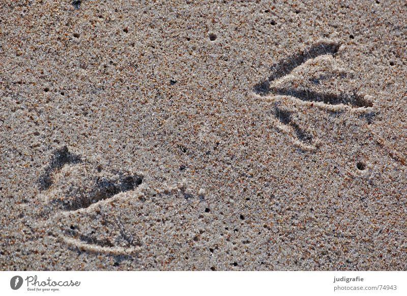 Beach Animal Feet Sand 2 Bird Coast Wet 3 Tracks Footprint Seagull Animal tracks 200