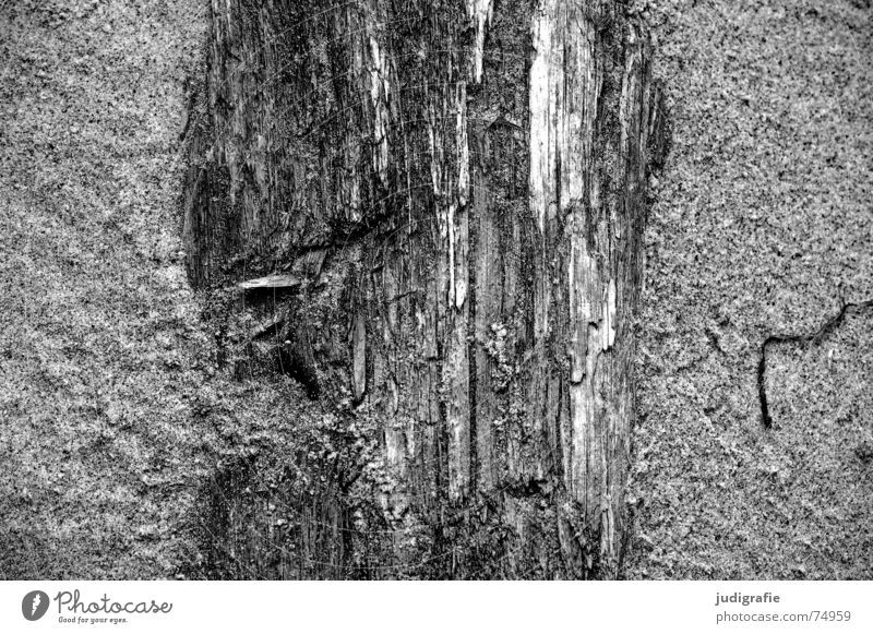 Nature Tree Ocean Beach Life Death Wood Sand Tree trunk Erosion Force of nature Western Beach Fischland-Darss-Zingst