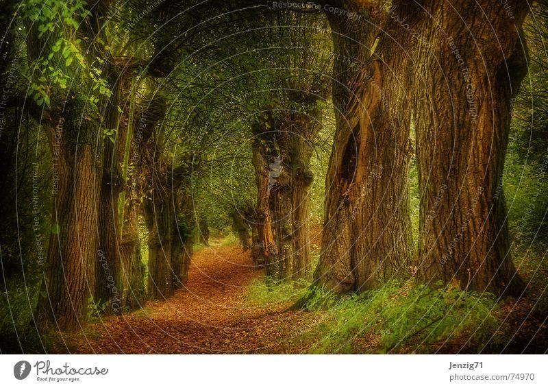 Tree Leaf Forest Autumn Lanes & trails Footpath Avenue Wood flour