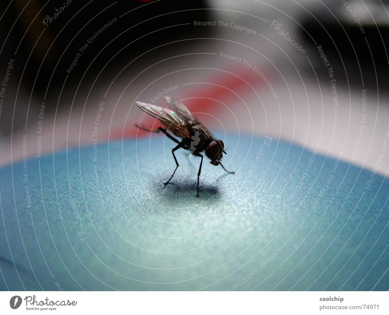 Fly Near Insect Cleaning Gymnastics Acrobat Handstand Go crazy