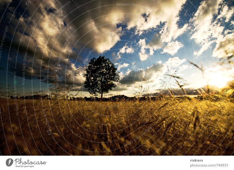 summertime Environment Nature Landscape Plant Elements Sky Clouds Horizon Sun Summer Beautiful weather Wind Tree Grass Field Illuminate Romp Friendliness