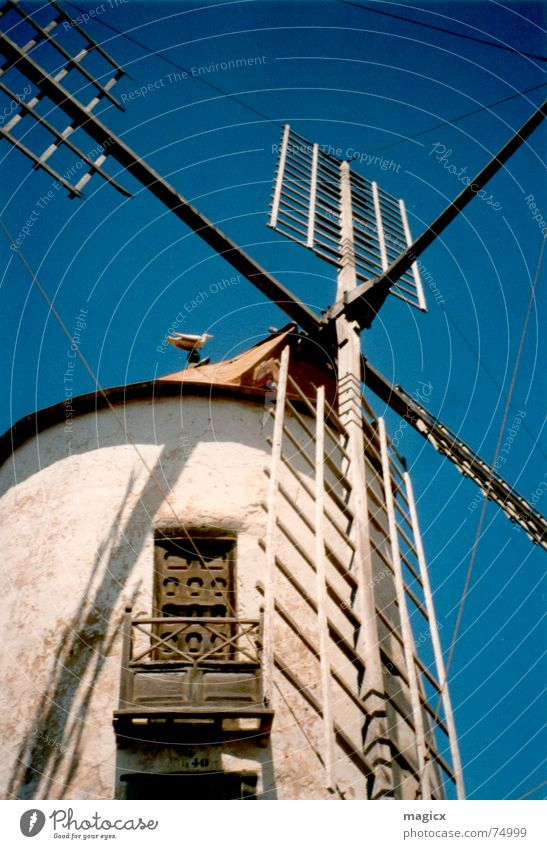 Sky Summer Vacation & Travel Wing Spain Seagull Blue sky Mill Windmill Lanzarote