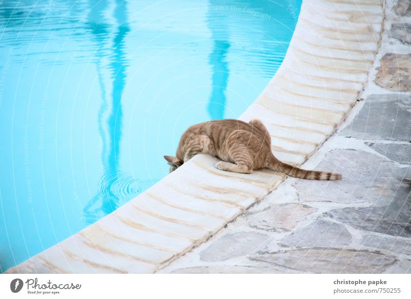 Cat Vacation & Travel Summer Animal Fear Sit Drinking water Cute Summer vacation Pet Caution Crawl