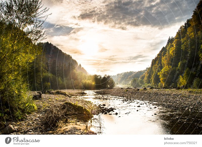 White water river in the golden evening light River Whitewater Water Sunlight Nature silent Relaxation Brook Mountain stream stream bed Landscape Back-light