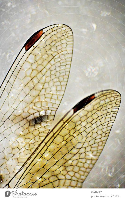 Lamp Flying Wing Insect Fairy tale Fantasy literature Independence Elf Dragonfly Mosaic Tiffany lamp