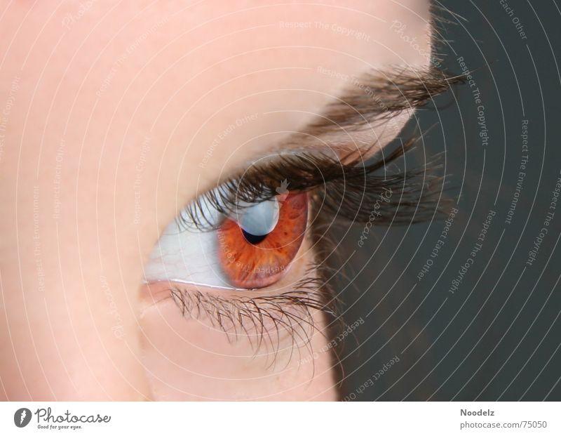 Woman Human being Eyes Eyelash Eyebrow Iris Eye colour