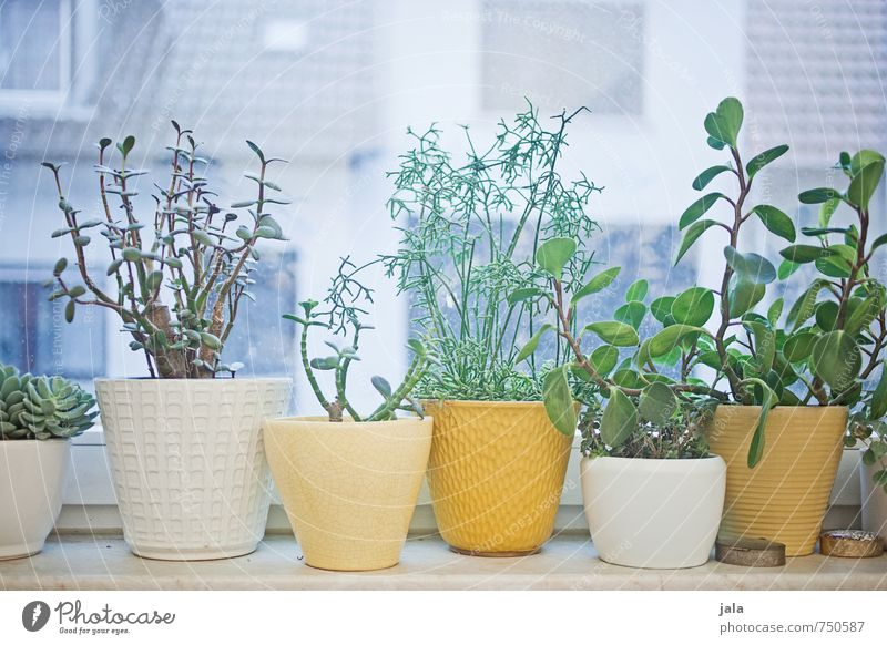 Plant Window Living or residing Decoration Esthetic Foliage plant Pot plant Succulent plants