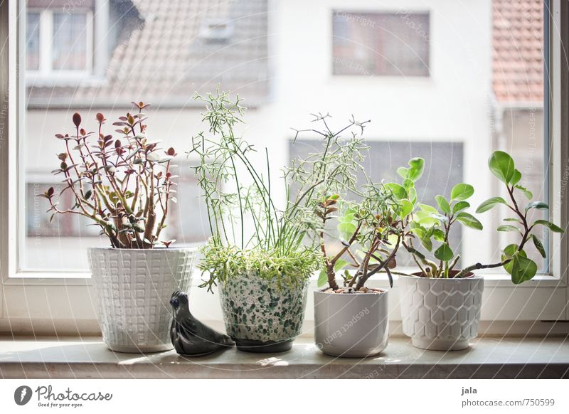 windowsill Living or residing Flat (apartment) Decoration Plant Foliage plant Pot plant Succulent plants Window Window board Esthetic Colour photo Interior shot