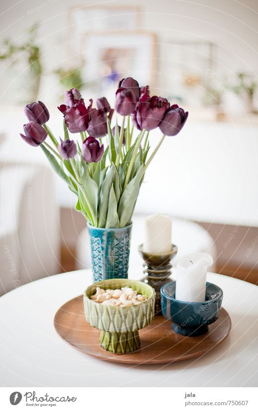 tulips Living or residing Flat (apartment) Decoration Table Vase Candle Earthenware Plant Flower Tulip Leaf Blossom Esthetic Friendliness Happiness Bright