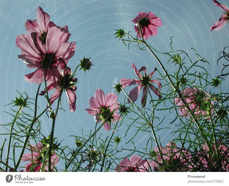 Sky Blue Clouds Blossom Grass Violet Stalk Bud