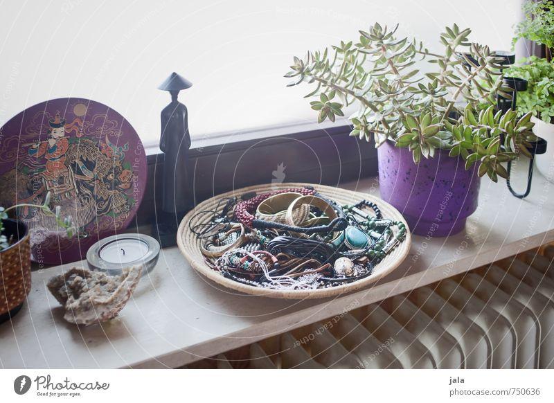 Plant Flat (apartment) Living or residing Decoration Esthetic Jewellery Foliage plant Pot plant Succulent plants