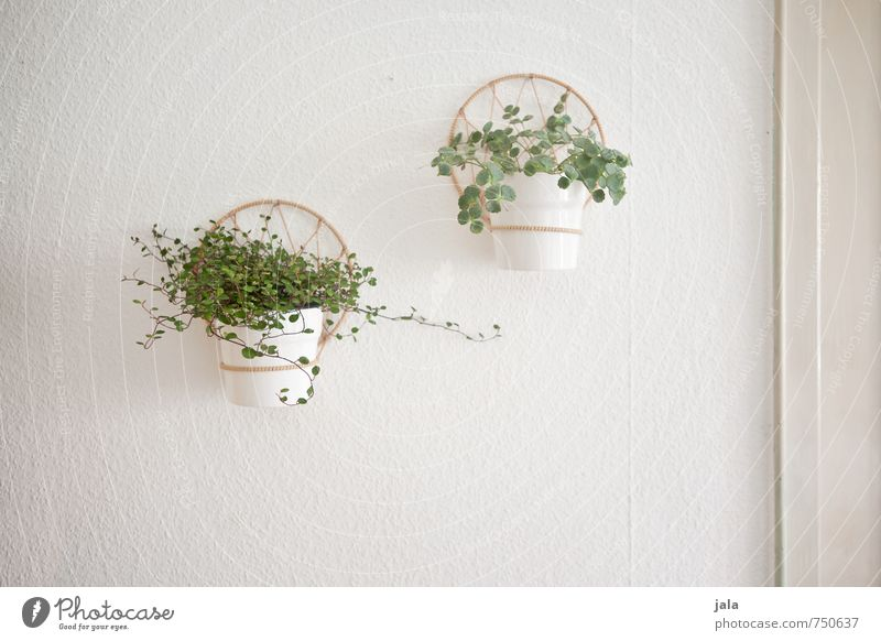 Green White Plant Leaf Wall (building) Wall (barrier) Bright Facade Flat (apartment) Living or residing Decoration Esthetic Friendliness Flowerpot Foliage plant