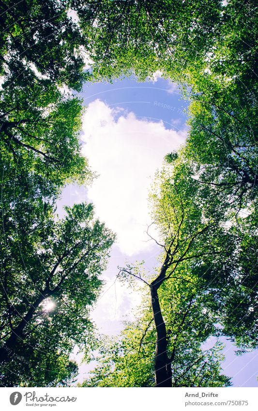 Sky Nature Summer Tree Landscape Clouds Forest Spring Small Wild