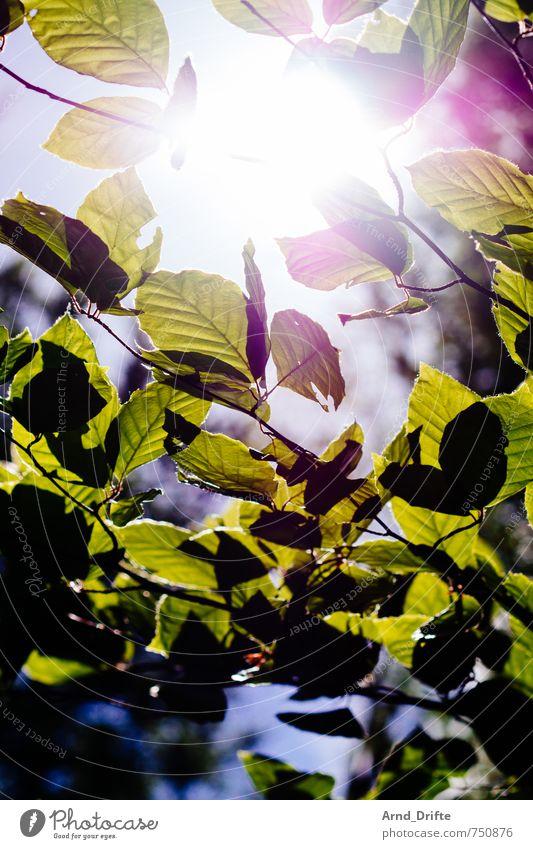 Sun Leaves Trip Professional training Nature Landscape Plant Sky Sunlight Spring Beautiful weather Tree Leaf Forest Bright Natural Green Branch Colour photo